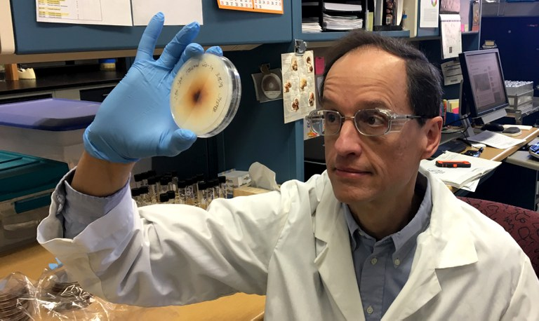 Ed Kaiser, Research Support Technologist, holds a Petri dish containing a mushroom culture. (Image: Matt Black)