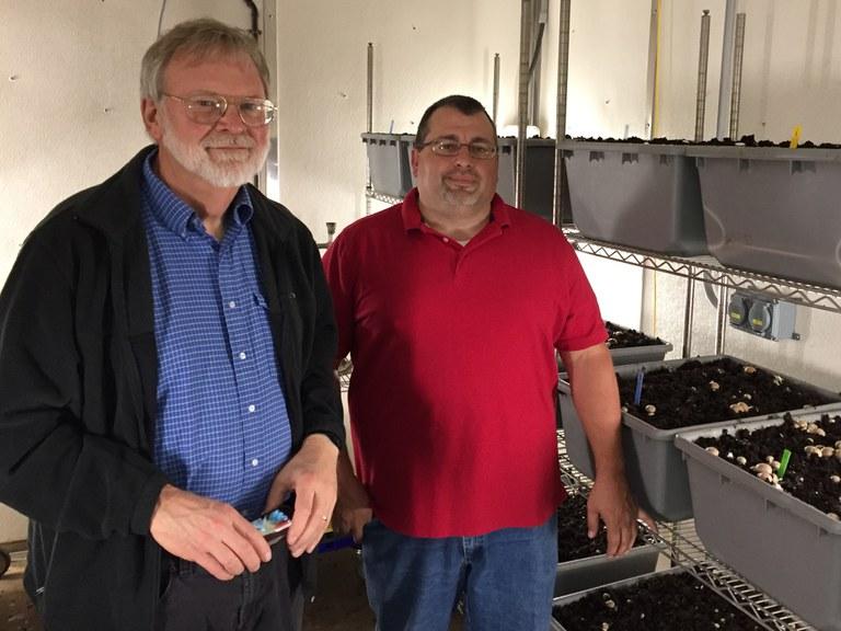 Steven Lindow (left) and John Pecchia tour the Mushroom Research Center at Penn State. (Image: Kevin Hockett)