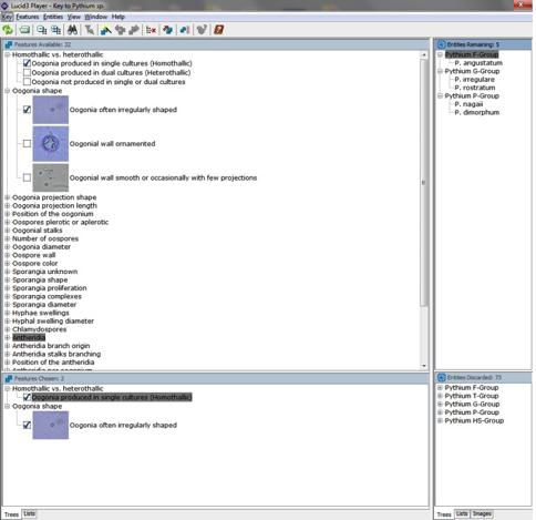 Screenshot of Lucid Builder program
