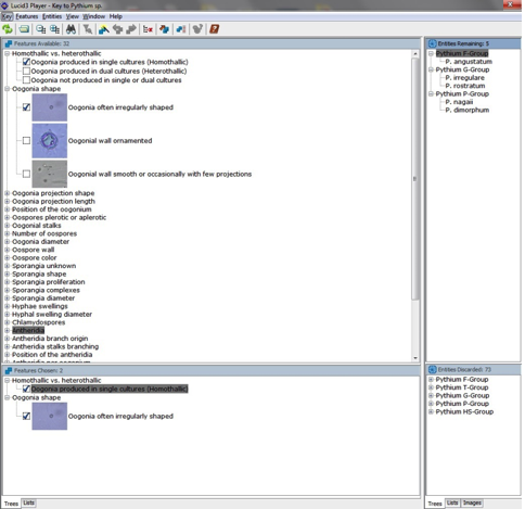Screenshot of Lucid Builder program