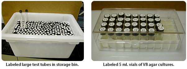 test tubes in storage bin